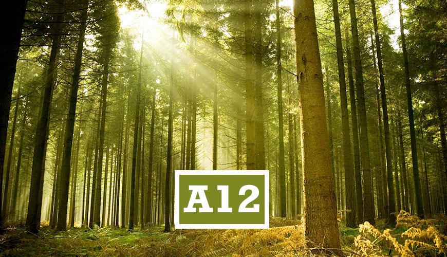 A12EDUMA