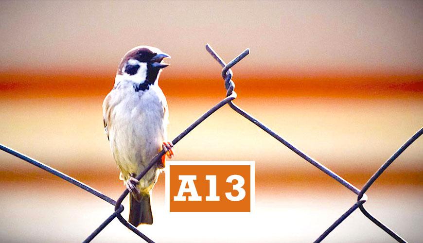 A13EDUMA
