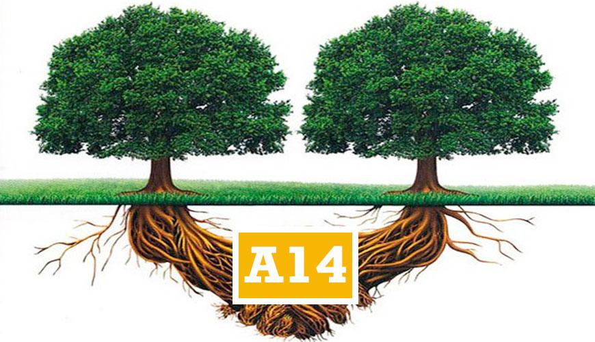 A14EDUMA
