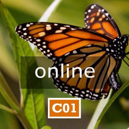 C01 online | APPARTENENZA E IDENTITÀ