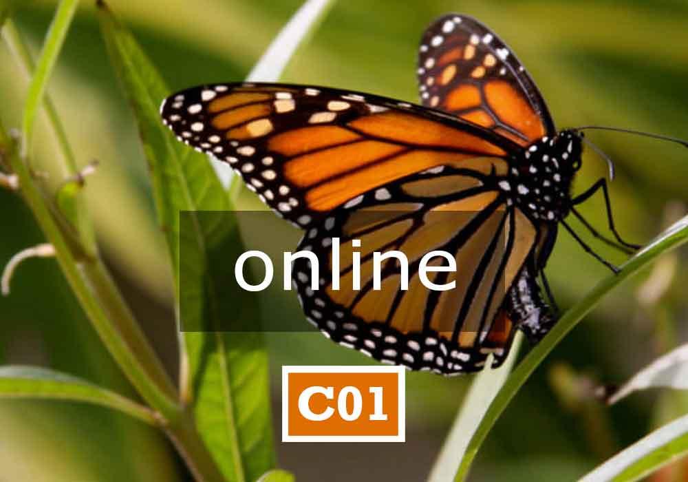 Unialeph-Seminari-C01-ONLINE-APPARTENENZA-E-IDENTITA-Online